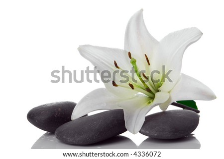 madonna lily and spa stone on white - stock photo