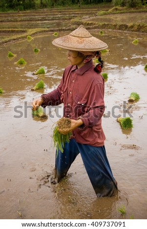 MAE HONG SON , NORTHEM THAILAND - JULY 20, 2005 :  July 2005, In the province of Mae Hong Son, north of Thailand close to Myanmar border. Burmese migrant woman working in the rice field.  - stock photo