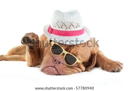 "Mafia looking dog saying ""Hi"" - stock photo"