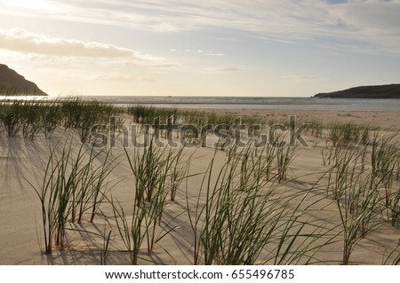 Maghera beach, county Donegal, Ireland. Grasses, blue sky with some white clouds.