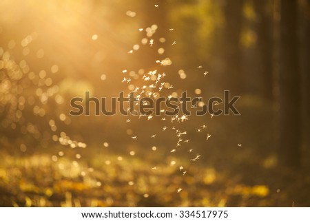 Magic autumn background with dancing fairies (midges) in colorful forest - stock photo
