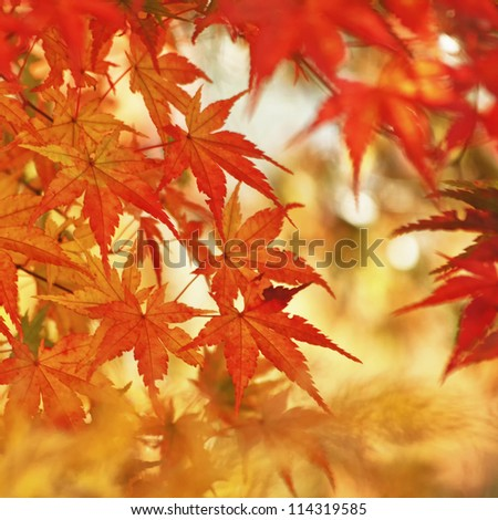 Magic autumn maple leaves. - stock photo