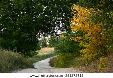 Magic autumn road to forest with old colorful trees - stock photo