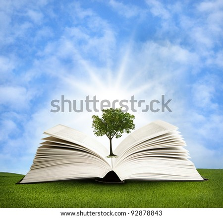 magic book with lights  and green tree - stock photo