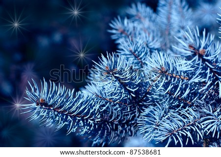 Magic branches of blue spruces at night - stock photo