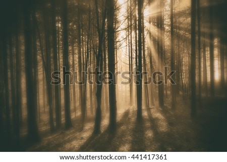 Magic creative golden blurry forest with sun rays.
