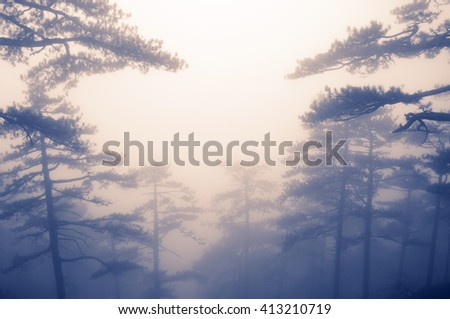 Magic foggy pine forest at sunrise. Split toned image. Soft focus.