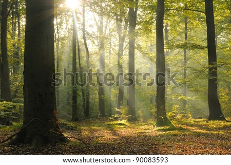 Magic forest - stock photo