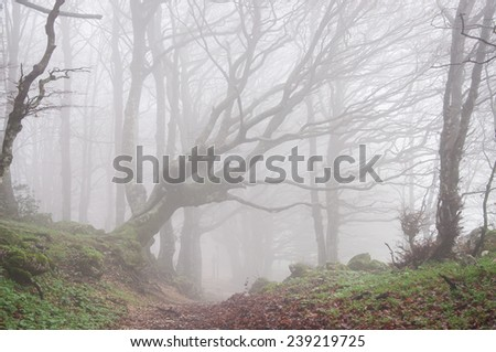 Magic forest in autumn with fog