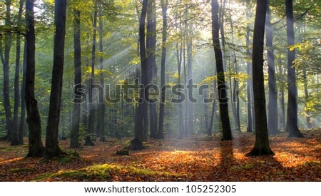 Magic forest in central Poland - stock photo