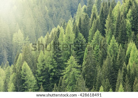 Magic forest lit by the sunlight. Coniferous forest region. Beautiful healthy forest in the national park. - stock photo