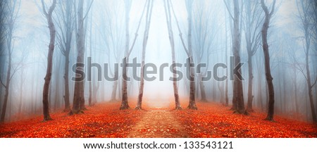 Magic forest path - stock photo
