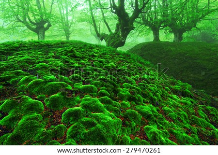 magic forest with moss bubbles and fog - stock photo