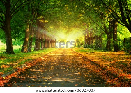 magic light at the and of walkway in autumn park - stock photo