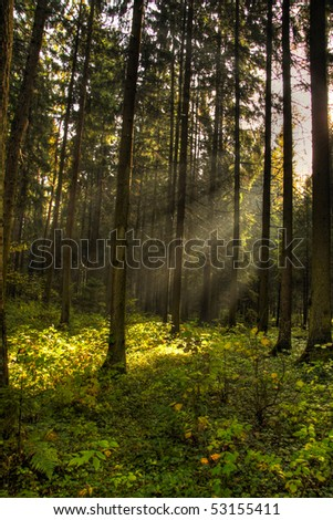 Magic light in dark forest