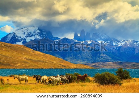 Magic light of sunset. Herd of mustangs on the shore of Laguna Azul. Rocks Torres del Paine visible among the clouds - stock photo