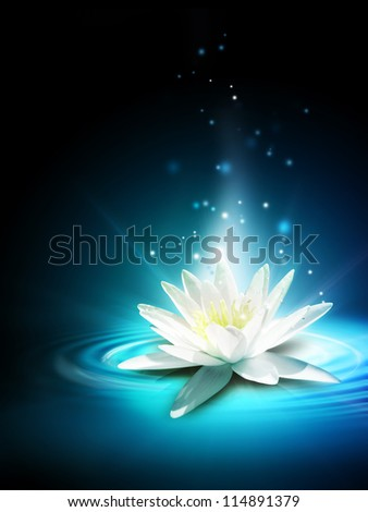 Magic lily flower on the water surface - stock photo