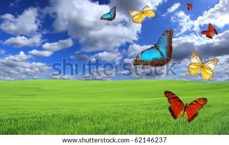 Magic meadow - stock photo