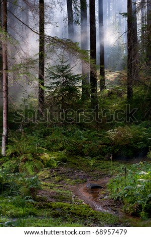 Magic misty forest - stock photo