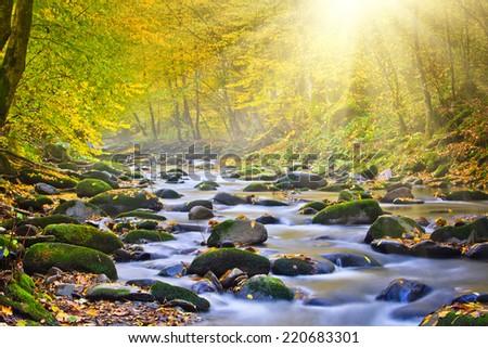 Magic river in forest, autumn landscape. - stock photo