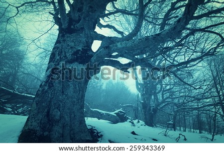 Magic spring in misty forest - stock photo