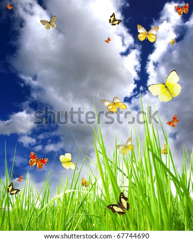 Magic spring meadow - stock photo