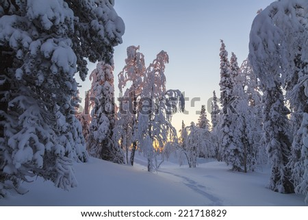 Magic sunrise in the snowy forest - stock photo