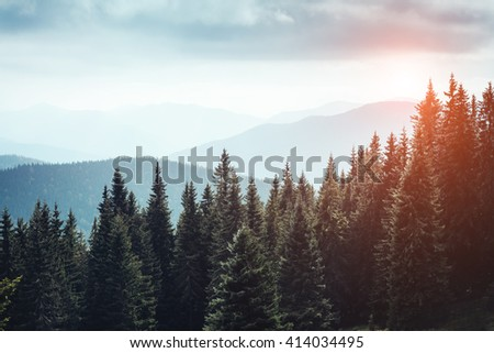 Magic view on the mysterious woods glowing by sunlight. Dramatic scene and picturesque picture. Location place Carpathian, Ukraine, Europe. Beauty world. Retro, vintage style. Instagram toning effect - stock photo