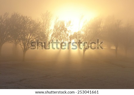 Magic winter light sun nature - stock photo