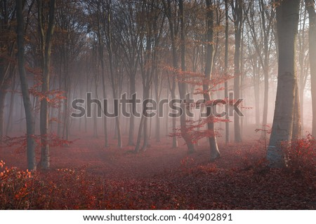 Magical afternoon light in foggy autumnal forest - stock photo