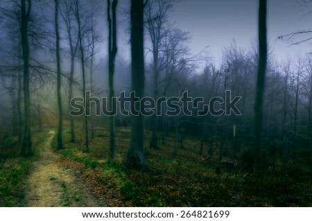 Magical and wonderful path in the dark forest. Blue green color scheme.