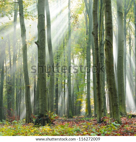 Magical autumn dawn in old beech forest Poland - stock photo