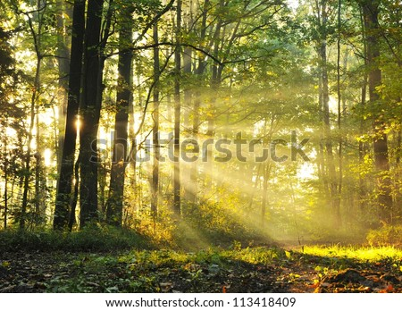 Magical autumn forest - stock photo
