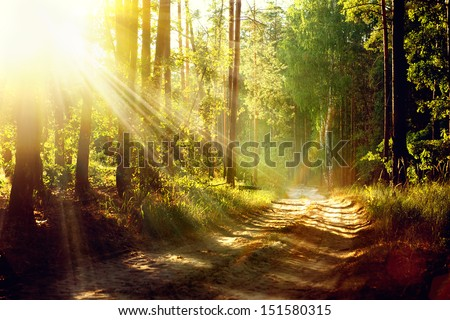 Magical Autumn Forest. Park. Beautiful Scene Misty Old Forest with Sun Rays, Shadows and Fog - stock photo