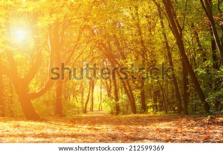Magical autumn forest with amazing sunlight on a sunny day - stock photo