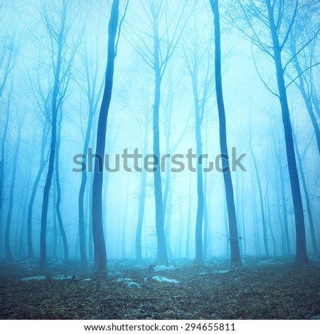 Magical blue color foggy woodland trees. Beautiful turquoise color in dreamy foggy forrest. - stock photo