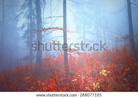 Magical colorful autumn forest landscape background. - stock photo