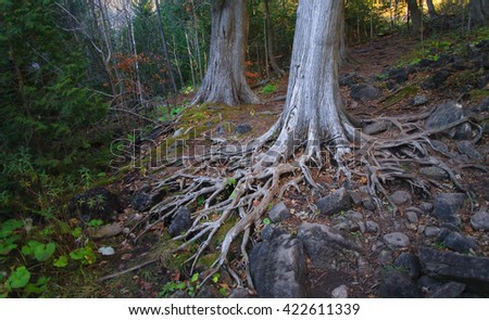 Tropical Tree Buttress Roots Edge Swamp Stock Photo 227945410 ...