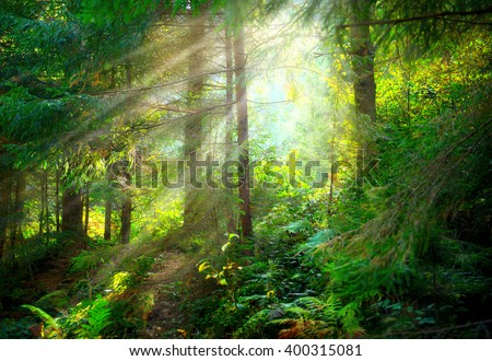 Magical Deep foggy Forest. Park. Beautiful Scene Misty Old Forest with Sun Rays, Shadows and Fog - stock photo