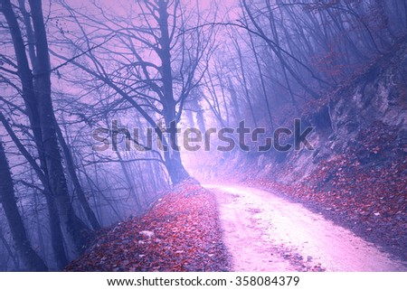 Magical foggy purple color light in mystic forest with road. - stock photo