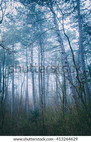 magical forest in misty morning