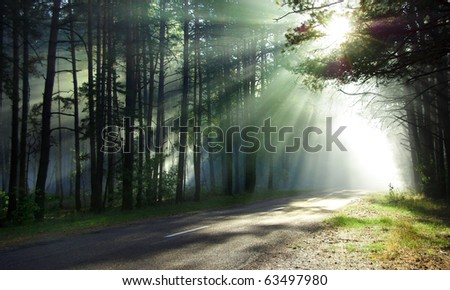 Magical forest in the morning sunlight rays. Bright rays of sunlight on the forest road. Slanting solar light through trees in the wood. Morning sun shining through the branches on the country road. - stock photo