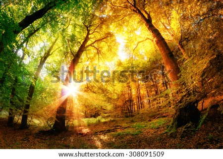 Magical forest scenery with a mix of summer and autumn colors and the sun shining through the leaves - stock photo