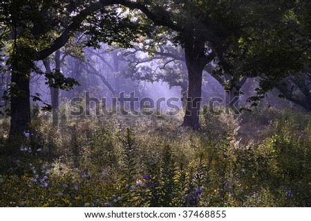 Magical Forest with fog - stock photo
