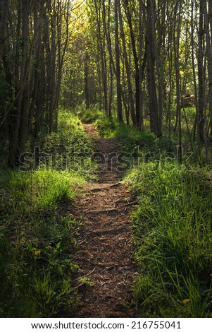 magical illuminated wavy bridleway in the woods - stock photo