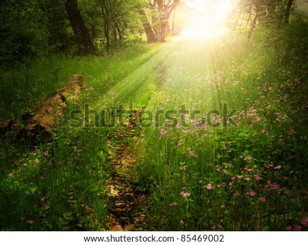 Magical light on a footpath in a green forest - stock photo