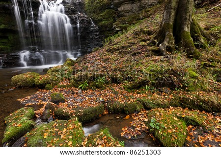Magical light on the autumnal carpet of leaves at Scaleber Force waterfall, Yorkshire Dales - stock photo
