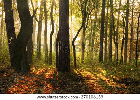 Magical morning light in autumn forest