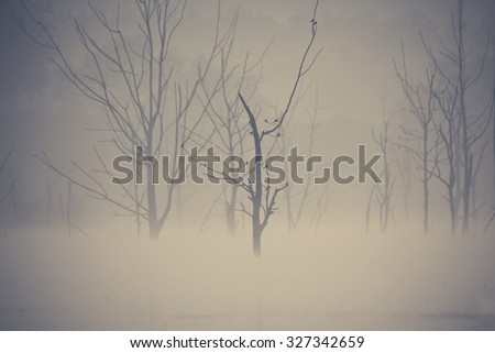 Magical morning mist foliage on a beautiful countryside scenery landscape ,Thailand - stock photo