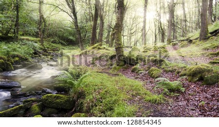 Magical old forest with a brook and sun shining through the tree branches, Dartmoor, Devon, England - stock photo